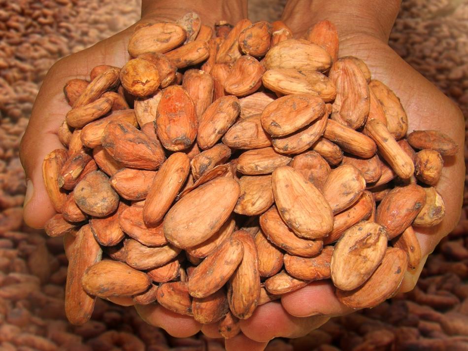 Cacao Sanchez 3