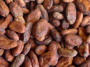 Cacao ferm seco